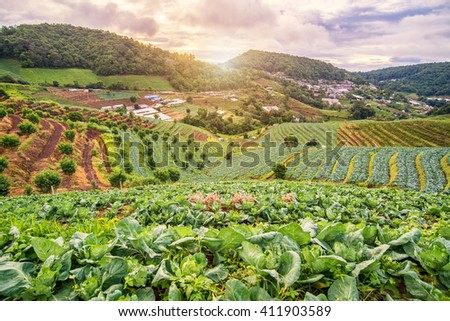 Beautiful sunrise view at cabbage field in mon jam mountain , famous travel location in chiangmai , Thailand - stock photo
