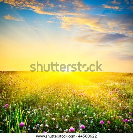 beautiful sunset above the flowers - stock photo