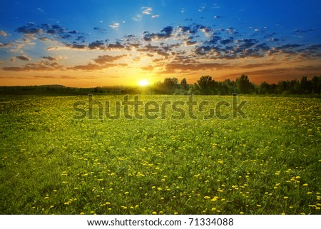 Beautiful sunset and dandelion field. - stock photo