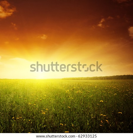 Beautiful sunset and flower field. - stock photo