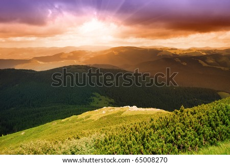 Beautiful sunset and pine forest in Carpathian mountains - stock photo