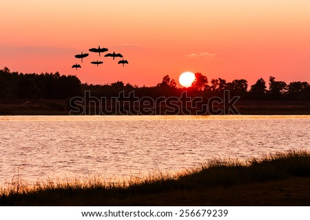 beautiful sunset and Silhouette bittern bird at river - stock photo