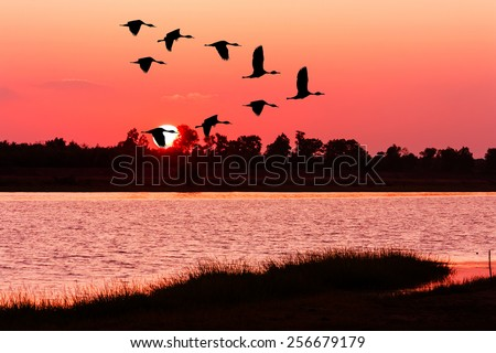 beautiful sunset and Silhouette of teal bird at river - stock photo