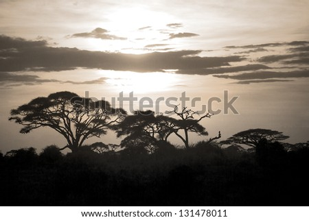 Beautiful sunset in Amboseli National Park 04 - stock photo
