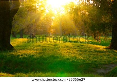 beautiful sunset in autumn forest. Sunbeams struggle through the trees - stock photo