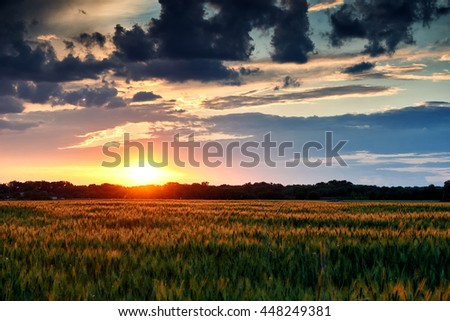 beautiful sunset in field, summer landscape, bright colorful sky and clouds as background, green wheat - stock photo
