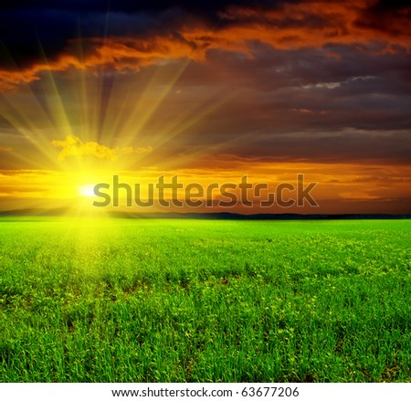 Beautiful sunset in green field. - stock photo