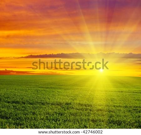 Beautiful sunset in green meadow - stock photo