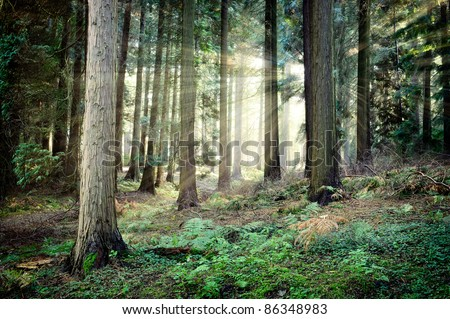 Beautiful sunset in mysterious forest - stock photo