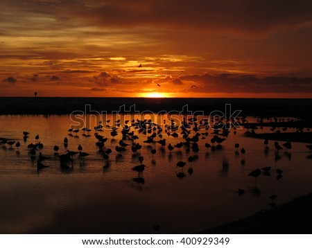 Beautiful Sunset in Siesta Key, Florida - stock photo