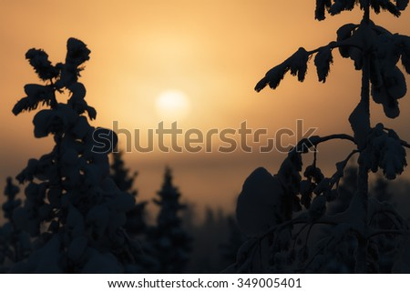 Beautiful sunset in snowy forest in christmas time