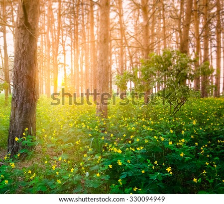 beautiful sunset in spring forest - stock photo