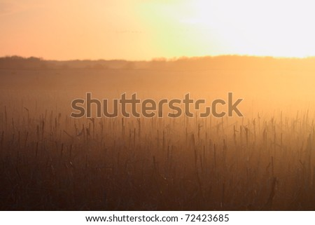 Beautiful sunset in the corn field - stock photo
