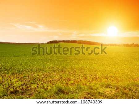 Beautiful sunset in the country over the forest and the field