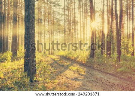 beautiful sunset in the foggy forest, dirty road, retro film filtered, instagram style  - stock photo