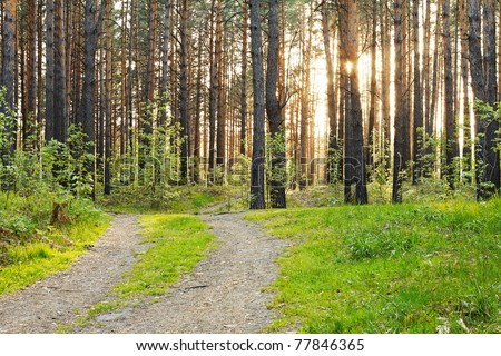 beautiful sunset in the forest - stock photo