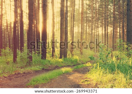 beautiful sunset in the forest after rain, retro film filtered, instagram style  - stock photo