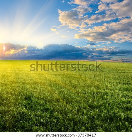 beautiful sunset in the green field