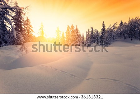 Beautiful sunset in winter forest Jluia Alps in Slovenia-Europe - stock photo