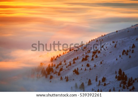 Beautiful sunset landscape in mountains. Winter Carpathian Mountain covered in snow illuminated  by sunrise sky.
