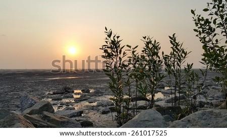 Beautiful sunset mangroves tree on shoreline at low tide of Morib Beach, Malaysia - stock photo