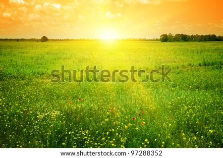 Beautiful sunset on a spring field - stock photo