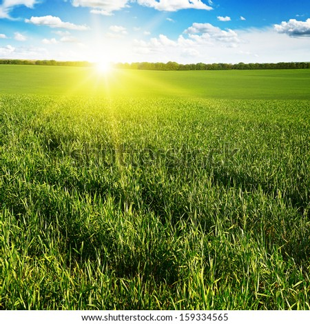 Beautiful sunset on green field                                     - stock photo