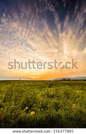 Beautiful sunset over a green field and pumpkins in foreground. - stock photo