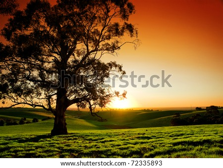 Beautiful Sunset over a rural meadow - stock photo