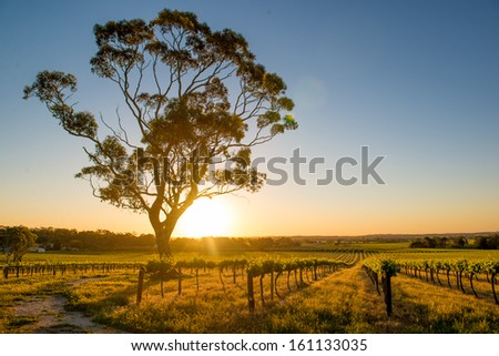 Beautiful sunset over Barossa Valley - stock photo
