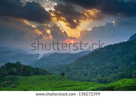 Beautiful sunset over green tea plantation in Munnar, Kerala, India - stock photo