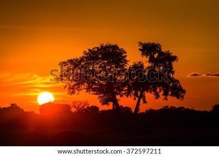 Beautiful sunset over the Okavango Delta (Okavango Grassland), One of the  Seven Natural Wonders of Africa, Botswana - stock photo