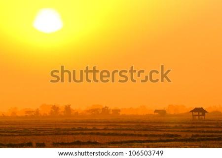 Beautiful sunset over the rice fields - stock photo