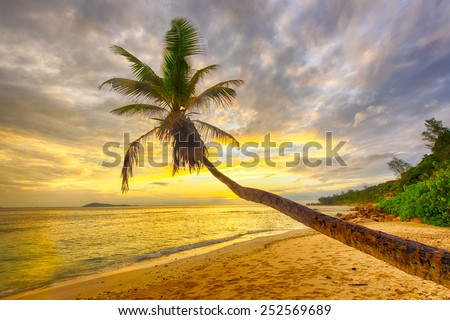 Beautiful sunset over the sea with a view at a single palm on the white beach in the Seychelles, island of La Digue.  - stock photo