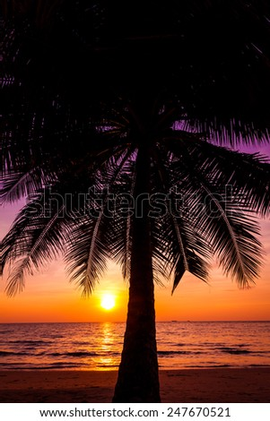 Beautiful sunset over the sea with a view at palms on the beach - stock photo
