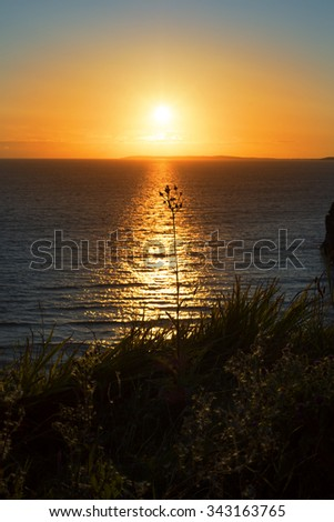 beautiful sunset over the wild tall grass on the wild atlantic way - stock photo