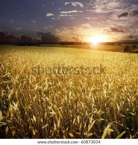 Beautiful sunset over wheat field. - stock photo