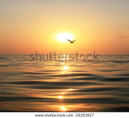 Beautiful sunset, shining in the sun sea and flying seagull - stock photo