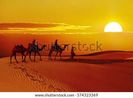 Beautiful sunset  with camels silhouettes in dunes at  desert , Jaisalmer,India - stock photo