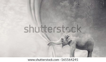 Beautiful surreal elephant that opens a curtain with its trunk in black and white - stock photo