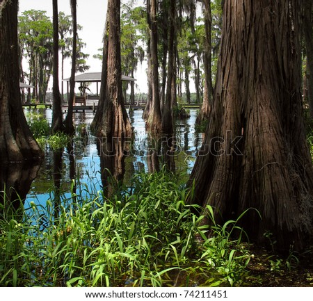 Beautiful swamp on a bright sunny day - stock photo
