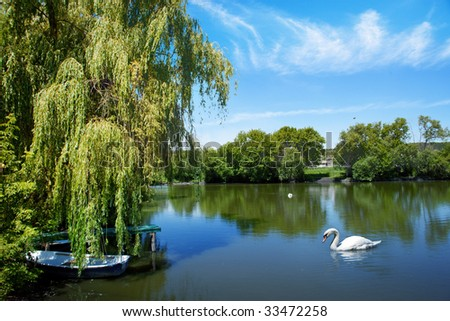 beautiful swan on beautiful  lake - stock photo