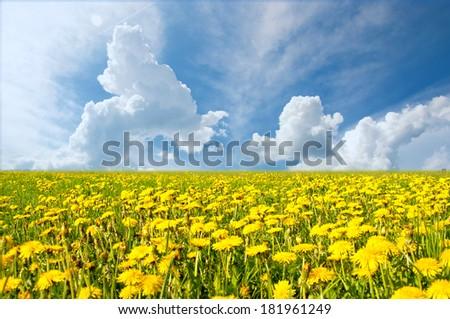 Beautiful Switzerland landscape in springtime with yellow flower fields. Clear blue sky - stock photo