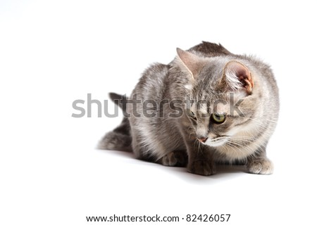beautiful tabby cat lying on white background - stock photo