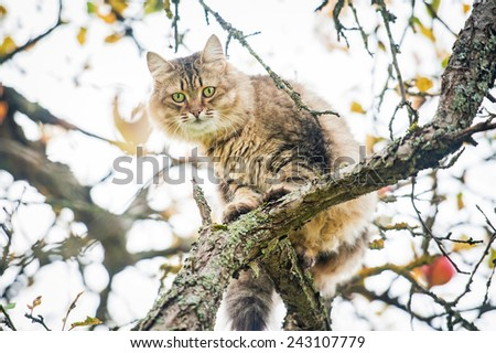 Beautiful tabby cat sitting on the tree - stock photo