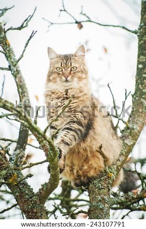 Beautiful tabby cat sitting on the tree - stock photo