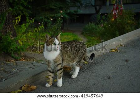 Beautiful tabby cat sitting outdoors - stock photo