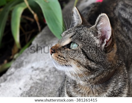 beautiful tabby cat with green eyes in the garden - stock photo