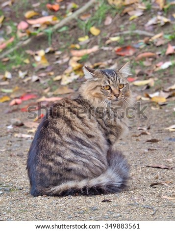 Beautiful tabby grey cat sitting on the ground, selective focus. - stock photo