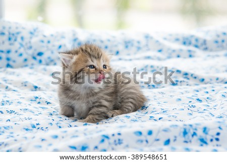 Beautiful tabby kitten sit and licking lip on bed. - stock photo